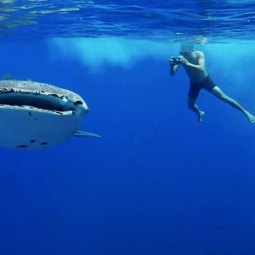 Tubbataha Diving Videos