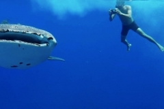 thumbs_tubbataha-diving-videos