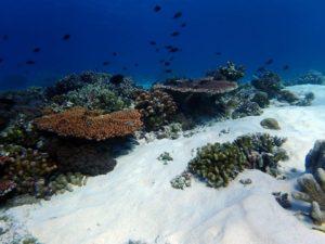 Tubbataha reef, shallow reef