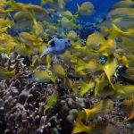 Fish on Tubbataha reeef