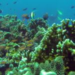 Reef in Tubbataha