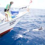 sakura-tubbataha-dolphins